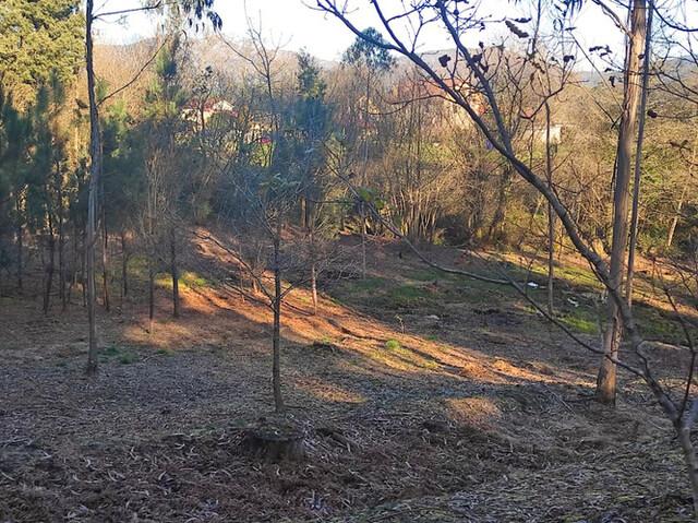 DORNELAS-PEDREIRA - foto 2