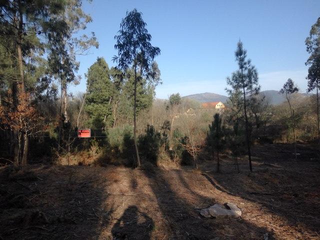 DORNELAS-PEDREIRA - foto 4