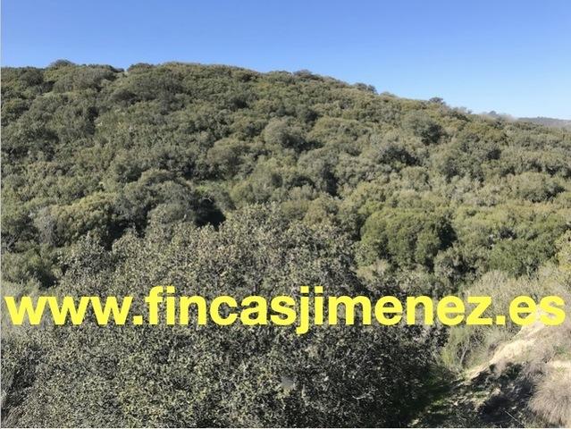 BONITA FINCA RECREO A 1, 15 H.  DE MADRID - foto 1