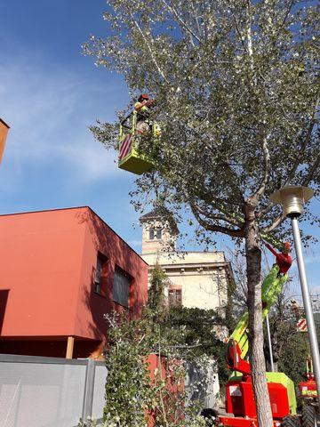 JARDINERIA Y FORESTAL LIMPIEZA PARCELAS - foto 6