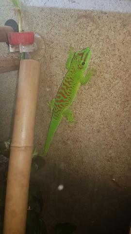 360g Reptil Gecko Nectar Alimentar Reptiles suplemento crocdoc