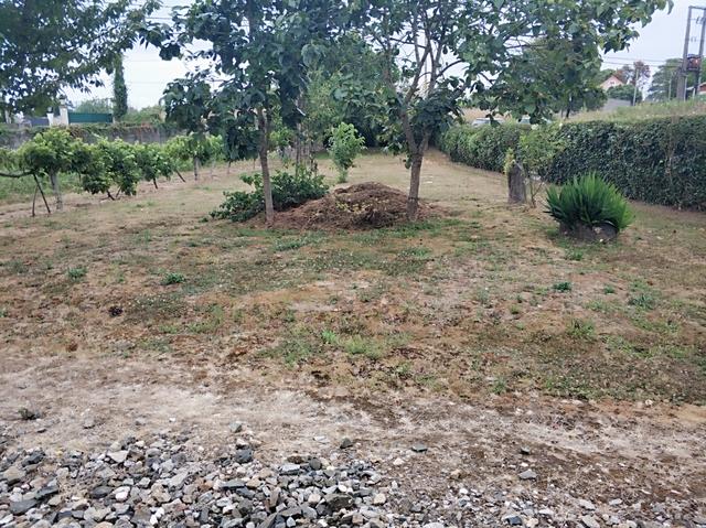 GANDARIO - GANDARIO - foto 2