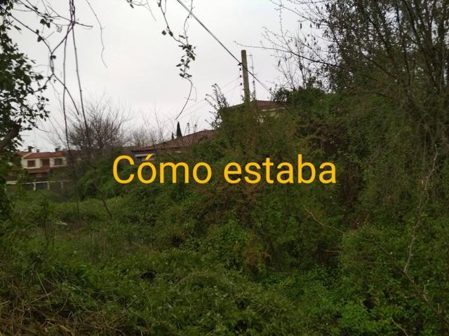 LIMPIEZA DE PARCELAS - foto 5