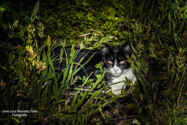 FOTOGRAFÍA PROFESIONAL DE MASCOTAS - foto 2