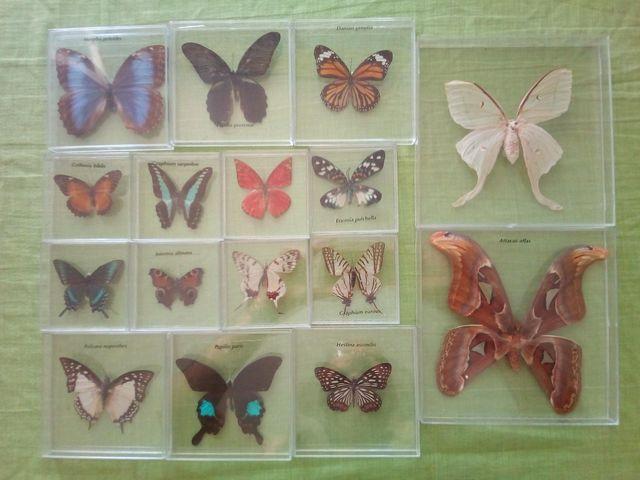 Coleccion Mariposas Del Mundo