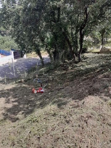 SERVICIOS JARDINERIA DESBROCE PODA TALA - foto 7