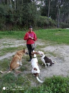 Adiestramiento En Grupo Perros Y Otros