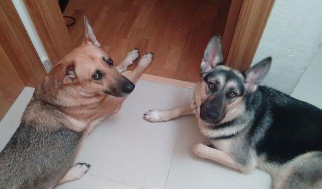 Cuidado De Mascotas A Domicilio