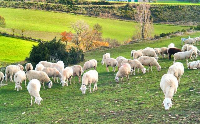 BUSCO TRABAJO EN GANADERÍA Y AGRICULTURA - foto 2