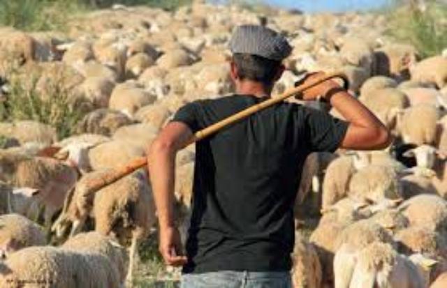 BUSCO TRABAJO EN GANADERÍA Y AGRICULTURA - foto 7