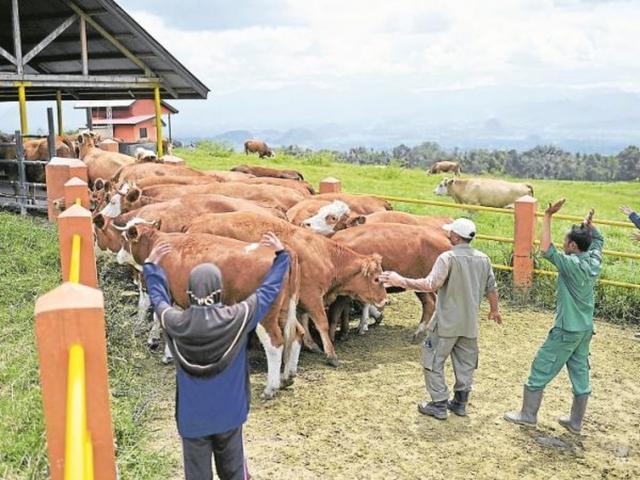 BUSCO TRABAJO EN GANADERÍA Y AGRICULTURA - foto 8