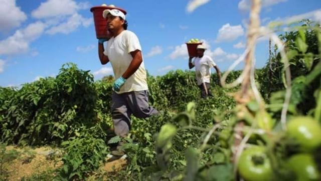 PEÓN EN GANADERÍA Y AGRICULTURA - foto 2