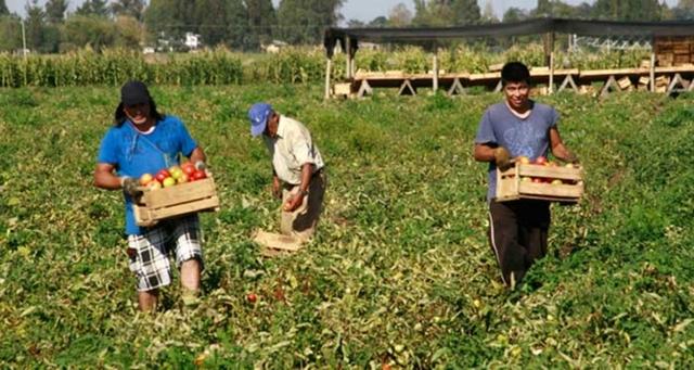 PEÓN EN GANADERÍA Y AGRICULTURA - foto 3