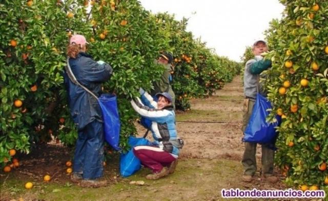 PEÓN EN GANADERÍA Y AGRICULTURA - foto 4