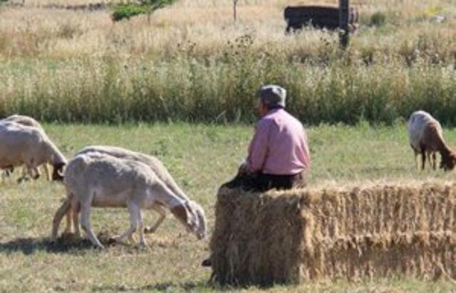 PEÓN EN GANADERÍA Y AGRICULTURA - foto 9