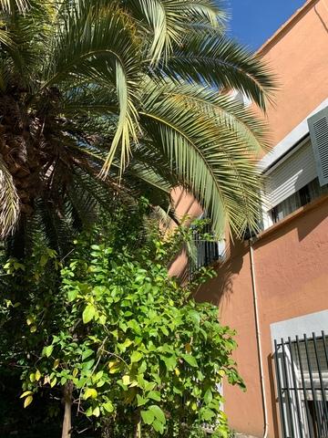 CASA CON TERRENO EDIFICABLE - foto 8