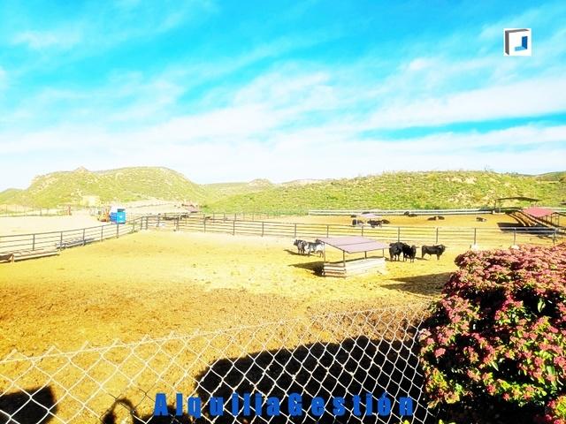 CHILOECHES,  NII,  GUADALAJARA - foto 3