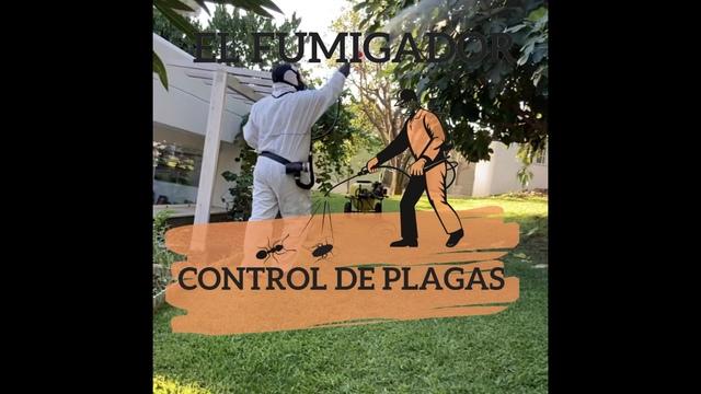 EL FUMIGADOR CONTROL DE PLAGAS EN MALAGA - foto 2