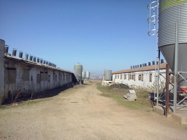 CEBADERO DE CERDOS - foto 6