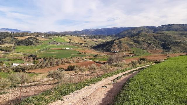 TERRENO CON OLIVOS Y TIERRA DE LABOR.  - foto 2