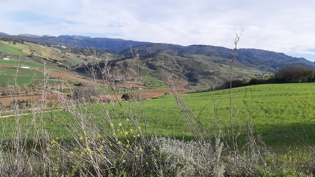 TERRENO CON OLIVOS Y TIERRA DE LABOR.  - foto 4