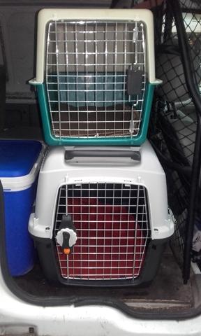 Transporte De Mascotas Por España