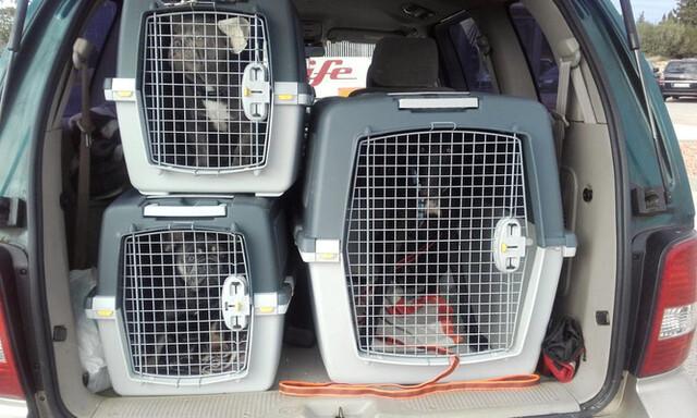 Profesional Transporte  Mascotas España.