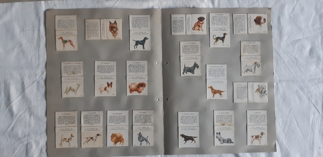 Perros, 40 Cajas De Cerillas