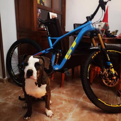 Bicicleta Gt Force Carbono