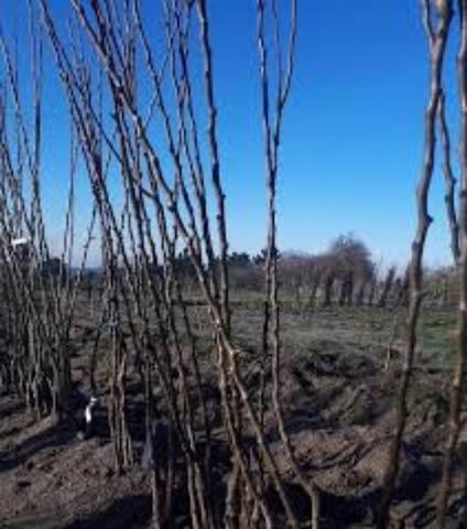 JARDINERIA PODAS DESBROCES PLANTACIONES - foto 4