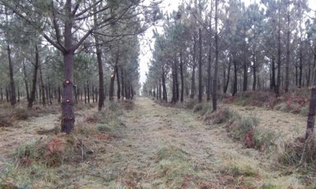 JARDINERIA PODAS DESBROCES PLANTACIONES - foto 6