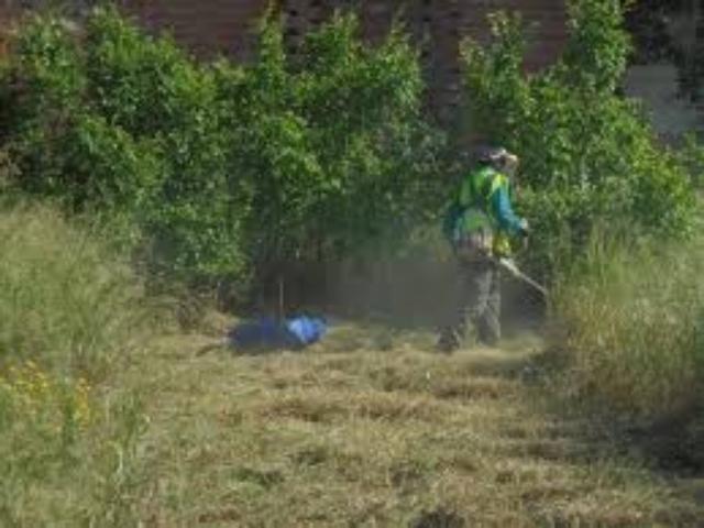 JARDINERIA PODAS DESBROCES PLANTACIONES - foto 8
