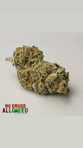 CANNABIS FLORES COGOLLOS LEGAL CBD - foto 4