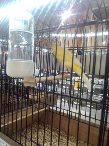 Mil Anuncios Com Canarios Compra Venta De Pajaros Canarios En Albacete Anuncios Con Fotos De Pajaros Comprar Un Pajaro Todas Las Razas De Pajaros