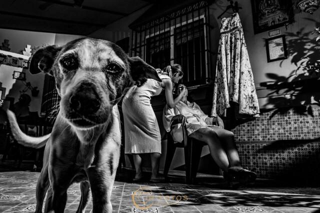 FOTOGRAFÍA Y VÍDEOS DE BODAS IPFOTOS - foto 4