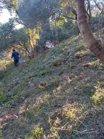 LIMPIEZA PARCELAS PODA TALA Y JARDINERIA - foto 2