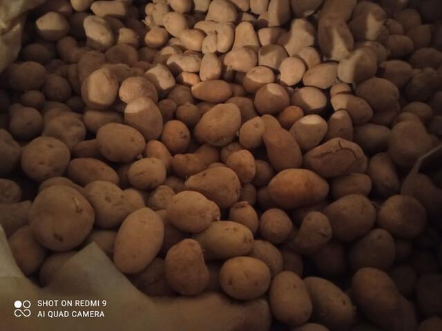 SEMILLA PATATAS - foto 2