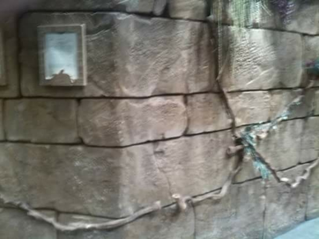 TEMATIZACION DE PISCINA - foto 5