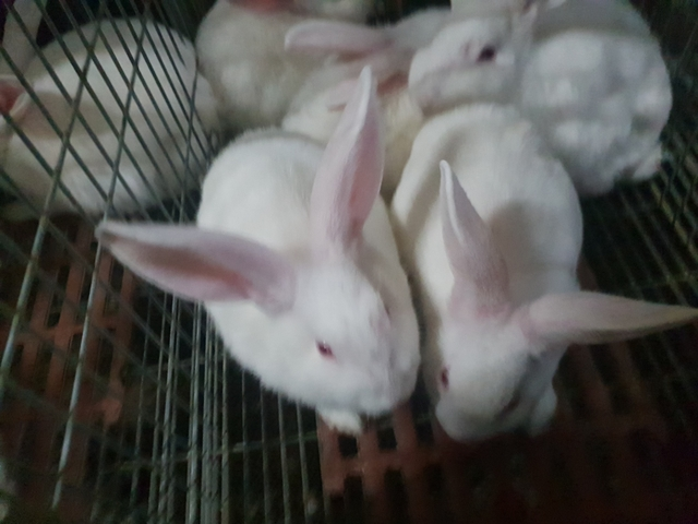 Mil Anuncios Com Granja Conejos Segunda Mano Y Anuncios Clasificados En Albacete