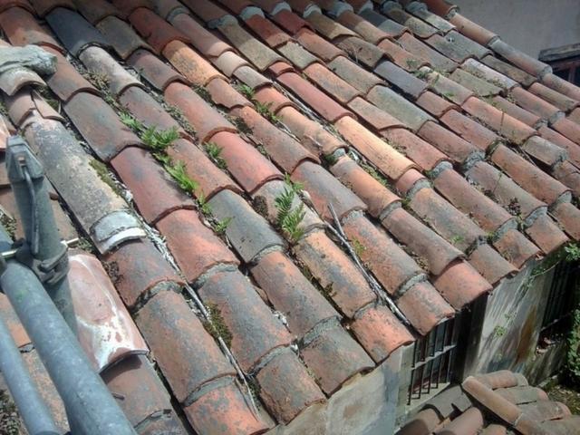 TEJADOS Y CANALONES BOCEGUILLAS - foto 2
