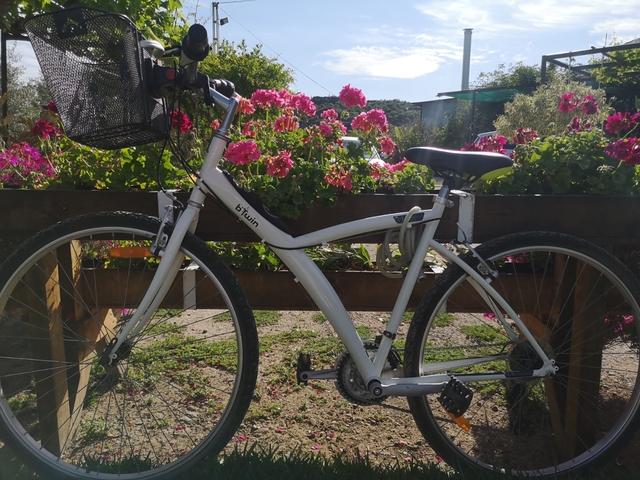 Bicicleta Mujer Paseo Muy Buen Estado