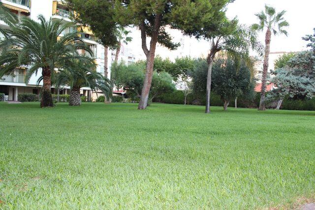PLAYA DE GANDIA - CARRER LA GAVINA,  1 - foto 9