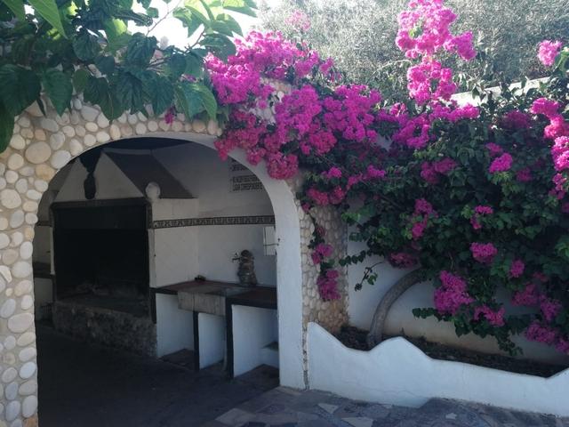 FINCA DEL MORO - LOS GIRASOLES - foto 3