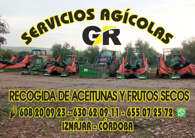 RECOGIDA DE ACEITUNAS Y ALMENDRAS - 2. 0 - foto 1