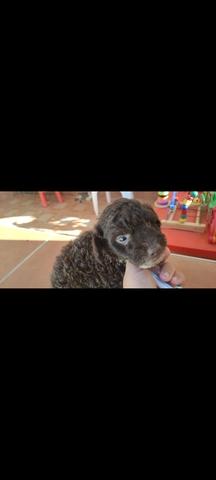 Oferta! Último Cachorrito De Agua Puro