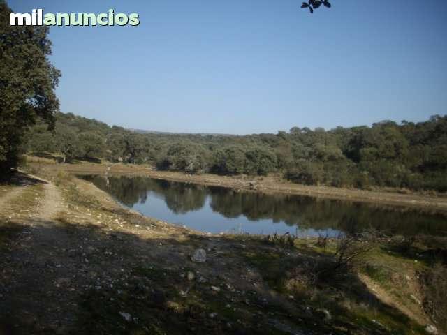 CACERES.  DEHESA Y CAZA MAYOR - foto 2