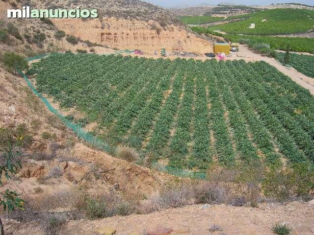 SE VENDE  CASA EN ANTAS ALMERIA - foto 4