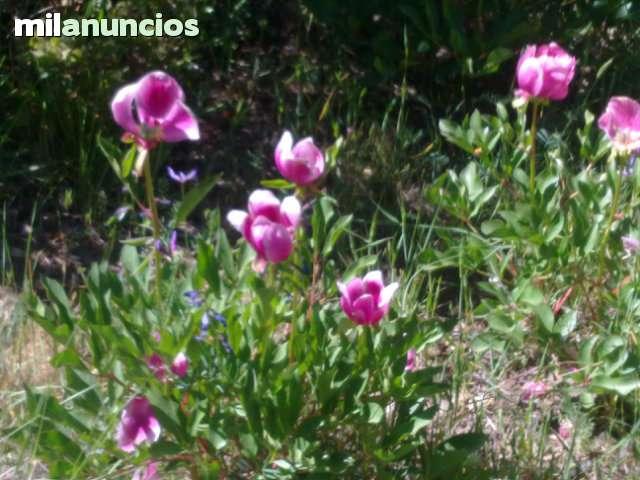 JARDINEROS EN GRANADA - foto 6