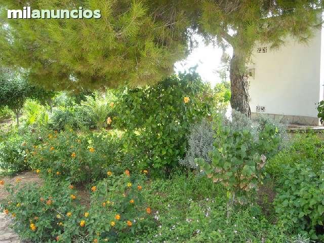 REFORMA EN IBIZA BALEARES - foto 2