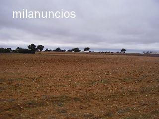 FINCA TOLEDO A 120 KMS MADRID - foto 2